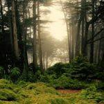 A covid-19 nos fará fazer as pazes com a natureza?